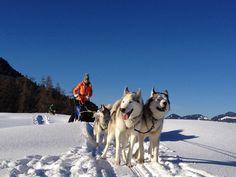 Bsundrige Zit Winterhighlight Hundeschlittenfahrt #visitvorarlberg #myvorarlberg #wintertime Highlights, Winter, Husky, Wonderland, Dogs, Animals, Alps, Winter Time, Animales