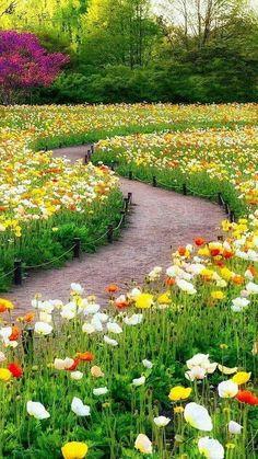 Beautiful Landscape Wallpaper, Beautiful Flowers Wallpapers, Scenery Wallpaper, Beautiful Landscapes, Beautiful Photos Of Nature, Beautiful Flowers Garden, Flowers Nature, Beautiful Gardens, Pretty Flowers