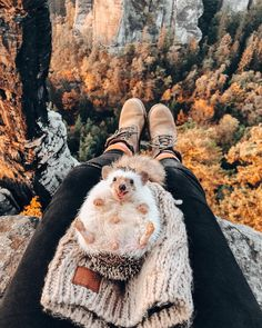 Cute Hedgehog traveling with you Cute Little Animals, Cute Funny Animals, Funny Cute, Cute Dogs, Cute Babies, Hedgehog Pet, Cute Hedgehog, Image Positive, Image Nature