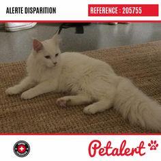 Cette Alerte (205755) est désormais close : elle n'est donc plus visible sur la plate-forme Petalert Suisse. Nous avons retrouvé notre animal blessé Merci pour votre aide. Visible, Aide, Cats, Switzerland, Thanks, Shape, Animaux, Gatos, Cat
