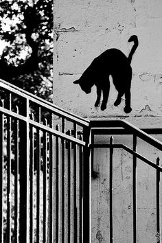 'gatoseoutrosbichos:  Cat on a Hot Tin Ramp (by guillaumedhios)' #Cats