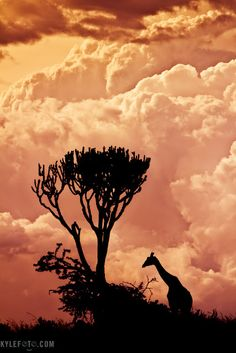 Africa silhouette of giraffe! Beautiful Sky, Beautiful Landscapes, Beautiful World, Beautiful Places, Beautiful Pictures, Giraffe Silhouette, Africa Silhouette, Out Of Africa, All Nature