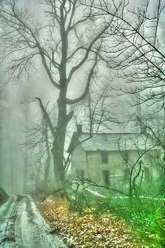 Winter Fog | A1 Pictures