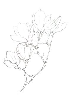 Pencil Floral Drawings can be so elegant! Magnolia Flowers have become one of my favorite spring flowers & I was even more excited to see how they can be beautifully added to a bridal bouquet! Simple yet strong! Beautiful Flower Drawings, Flower Art Drawing, Flower Drawing Tutorials, Floral Drawing, Flower Sketches, Painting & Drawing, Line Drawings Of Flowers, Bouquet Of Flowers Drawing, Draw Flowers