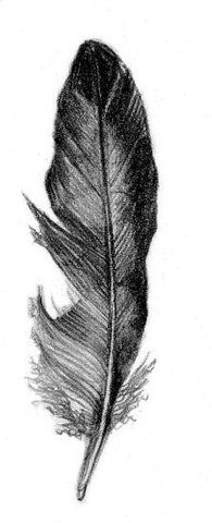 feathers that fall from the sky and land at my feet. had this happen with a hawk feather. surreal and such a gift from spirit. confirmations like this are precious and magical beyond description. Spirit Tattoo, Doodles Zentangles, Black Feathers, Vintage Labels, Coloring Book Pages, Drawing Tips, Drawing Ideas, Pencil Art, Love Art