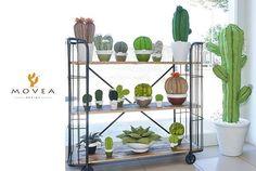 Evergreen. . www.movea.it #cactus #tessuto #succulent #madeinitaly #salento #nature #love #arredamentodesign #design #flowerdesign #homdecor #home #puglia #movea#junglelove #garden #livingroom #indoorplants #plantlife #botanical #floristdesign #ecoliving #colour #green #greendesign #greenlove #photography