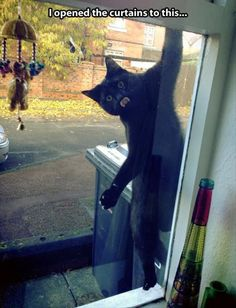 funny cat on window