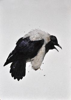 Pied Crow #1 - Karl Mårtens  - watercolor