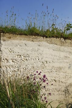 Chalky soils: plants for