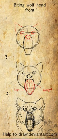 Biting Wolf Front Tutorial by CasArts