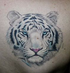 Tattoos White Tigers on Tiger Tattoo Graphics Code   Tiger Tattoo Comments   Pictures