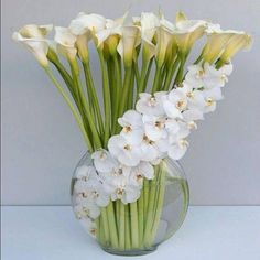 on A visually stunning orchid arrangement featuring Calla lilies.A visually stunning orchid arrangement featuring Calla lilies. Orchid Arrangements, Beautiful Flower Arrangements, Fresh Flowers, White Flowers, Beautiful Flowers, White Orchids, Contemporary Flower Arrangements, White Lilies, Ikebana