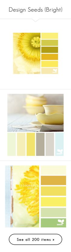 """""""Design Seeds (Bright)"""" by mmmartha ❤ liked on Polyvore featuring color palettes, colors, design seeds, backgrounds, yellow, designseeds, color schemes, colours, fillers and pictures"""