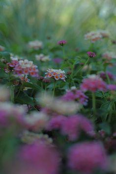 Botanical Gardens August 2015