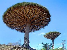 """'Socotra Island"""" - Located in the Indian Ocean, 250 km from Somalia and 340 km from Yemen."""