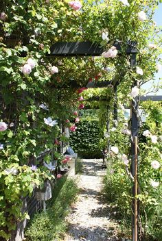 Trellis with climbing roses - full on one side, more open on other