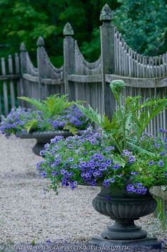 urns planted with cardoon or artichoke in center and blue annual spilling out of it