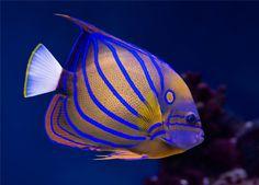 http://zangaru.com/4/7/95/your_life/pets_animals/top_10_tropical_fish