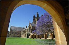 The University of Sydney - the grandeur of European universities with the weather of Australia: idyllic.