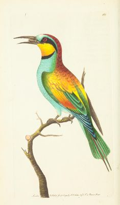 (1813) v.5 - The naturalist's miscellany, or Coloured figures of natural objects -