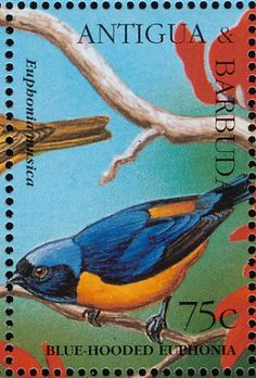 Antillean Euphonia stamps - mainly images - gallery format