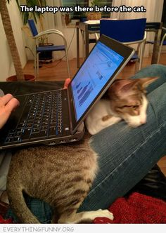 funny caption cat laptop cat under laptop was here first