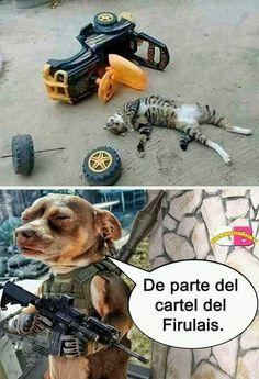 Cat Memes, Dankest Memes, Funny Memes, Hilarious, Animals And Pets, Funny Animals, Cute Animals, Funny Cat Compilation, Mexican Humor