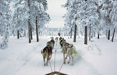Been there, done that. Husky dog sledging is exhausting, exhilarating and a tiny bit smelly.