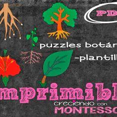 Botánica Montessori - Plantillas para los puzzles - Imprimible