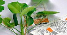 Невероятные свойства этого средства способны реанимировать даже самое безнадежное растение. Засохшие, вялые растения — всех возможно вернуть к зеленой жизни!