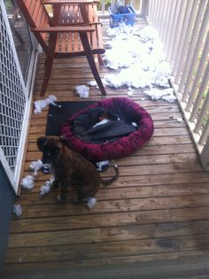 Beware of faulty pet beds... Astro says it just blew up all by itself & the stuffing went everywhere