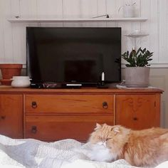 Une belle commode antique dénichée sur #lespac par @marianebi22 et son chat! 😉😺 Son Chat, Decoration, Flat Screen, Design, Antique Dressers, Decorating, Flat Screen Display, Dekorasyon, Deko