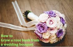 Learn how to grow a rose bush from a wedding flower bouquet. Perfect for wedding season!