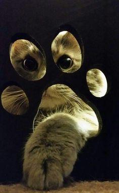 ya put one paw in......