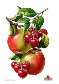 Tutti-Frutti - Design Innova