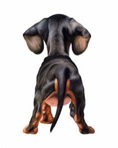 The Long and Short of it All: A Dachshund Dog News Magazine: Dachshund Gifts and Fine Art by Dee Dee Murry