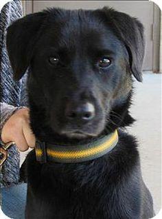 #BirminghamAL - Meet Jade a dog for adoption #TheGBHS #BhamPets #BlackDog