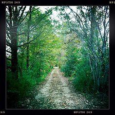 the road (path) less taken