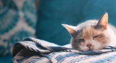 Filename: beautiful desktop wallpaper Resolution: File size: 1095 kB Uploaded: Dodge Round Date: Desktop Wallpapers Tumblr, Free Desktop Wallpaper, Cute Wallpapers, I Love Cats, Cute Cats, Funny Cats, Winter Cat, Cute Cat Wallpaper, Whiskers On Kittens