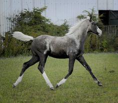 Unique colouring on this colt.