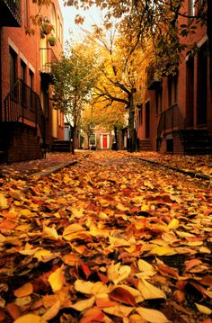 Walking through streets in Autumn and crunching leaves under foot is still one of my favorite things.