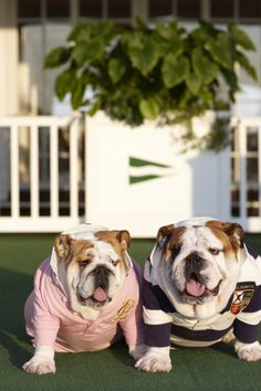 preppy bulldogs. i love this too much!