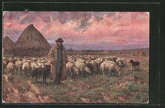 schöne AK Schafhirte mit seiner Herde und seinem Hund auf einer Weide 1915