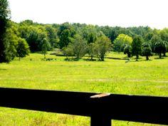 www.EquestrianSprings.com Ocala's Most Beautiful Equestrian Community.  Facebook: https://www.facebook.com/EquestrianSpringsOcala  Twitter: @EquestrianOcala