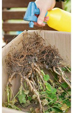 45 Backyard Landscaping Ideas On A Budget Organic Container Gardening, Gardening Tips, Winter Plants, Winter Garden, Cold Climate Gardening, How To Make Compost, Magic Herbs, Garden Architecture, Natural Garden
