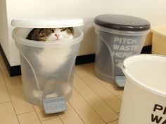 Hey kid! ...I am sick of this cat-kins diet! Feed me your left overs here! mom and dad wont ever suspect a thing if im in here. lol!