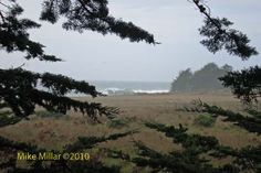 A great blog on walks in Sonoma /Mendonoma area: Walk On Beach Access