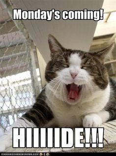 Hide Monday Is Coming quotes quote funny quotes monday days of the week sunday monday quotes sunday quotes tomorrows monday sunday humor Funny Picture Quotes, Funny Cat Pictures, Funny Images, Funny Quotes, Sunday Quotes Funny, Hilarious Photos, Humor Quotes, Funny Cats, Funny Animals