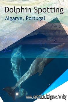 """Out of the #Marinha of #Albufeira tours are organized to spot #dolphins. You will also visit the famous #BenagilCave and #PraiadaMarinha on this tour."" Read more on the page ""things to do"" - You will find a translate button on this page with which you can choose your preferred language.  #Portugal #Algarve #DolfijnenSpotten #DolphinSpotting #Albufeira #Wildlife"