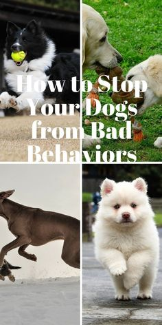 You can stop your dog from behaving badly .Discover how as you click this link,,, dog training | dog training tips | dog training obedience | dog training tricks | dog training potty | Dog Training Advice and Tips | Andrea Arden Dog Training | Dog training Advice | Dog Training | Dog training | dog training | #dogtraining #dogtrickstraining #dogtipsandtricks
